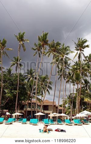 Alona Beach palms