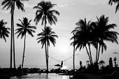 Silhouettes of palm trees on a tropical beach, black and white photography. poster