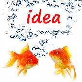 idea or creativity concept with goldfish and water bubbles on white poster