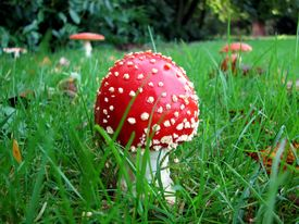 Baby Toadstool