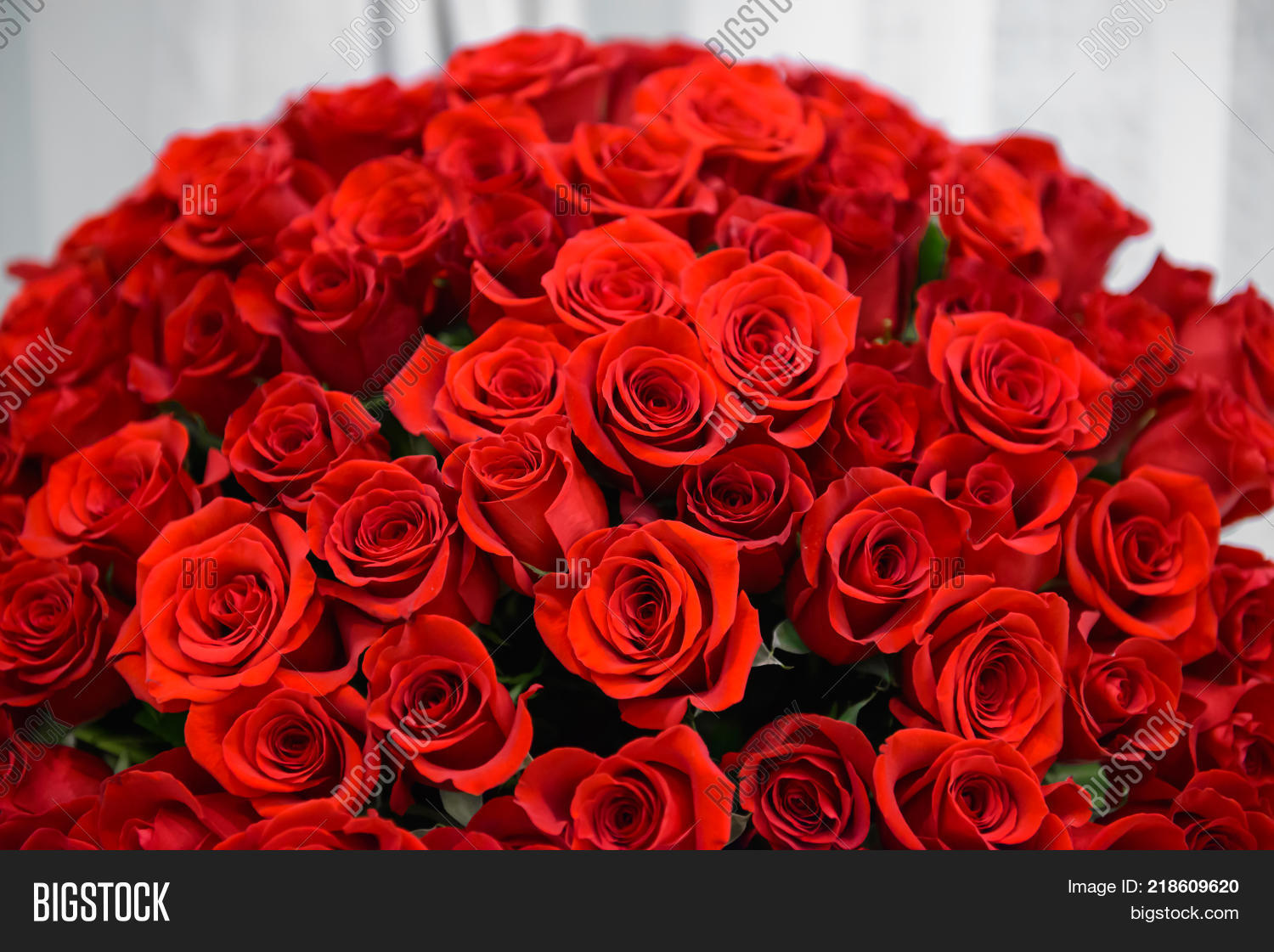 Background many red image photo free trial bigstock background of many red roses scarlet luxury rose close noble holiday flowers for a izmirmasajfo