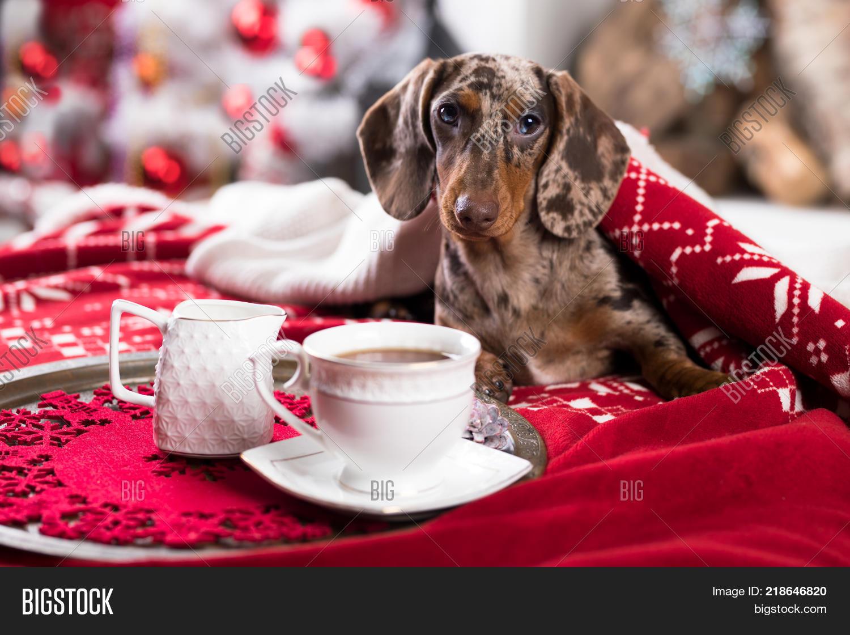 Coffee Christmas Morning.Christmas Morning Image Photo Free Trial Bigstock