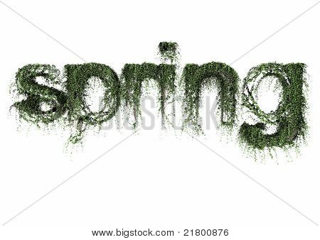 Ivy spring text