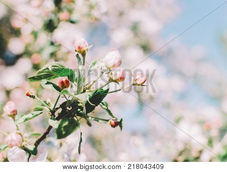 Flowers of the trees in spring time on sky background