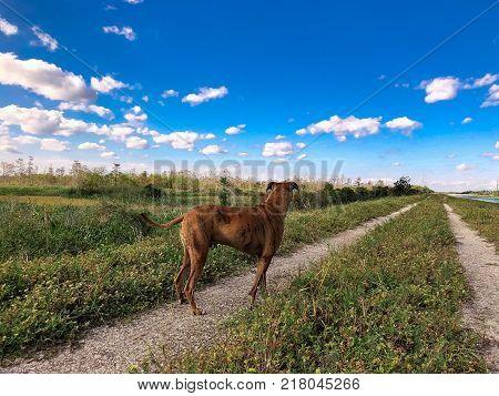 Happy Boxer Dog