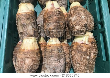 Many taro root in green container for cooking