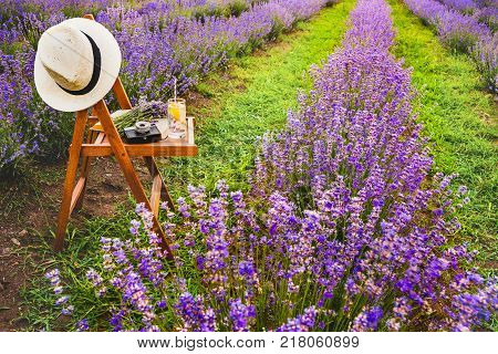 A chair with a hanged over hat an open book a retro camera and a bunch of lavender flowers between the blooming lavender rows under the summer sunset rays. Dream and relax concept.