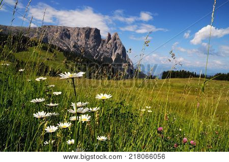 Beautiful landscape of Sciliar Group in the Dolomites as seen from Alpe di Siusi, Italy.
