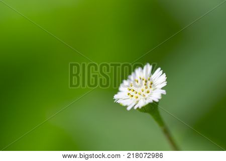 Small white flowers against a green background.