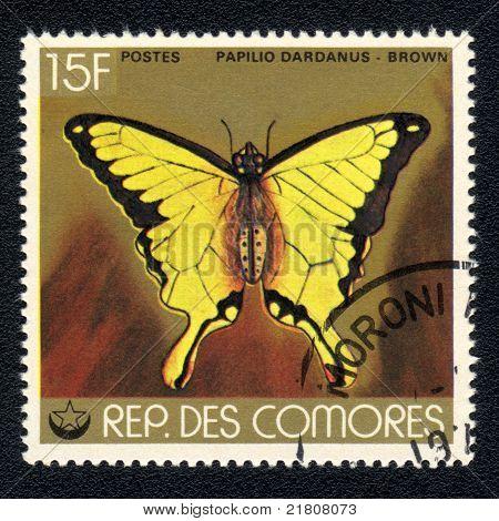 Butterfly Papilio Dardanus - Brown