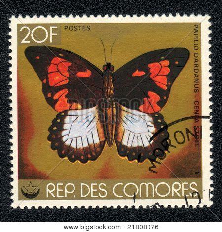 Butterfly Papilio Dardanus