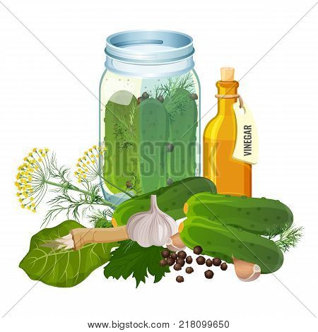 Jar with cucumbers and ingredients for pickles preparation such as spicy garlic, lettuce leaves, fresh dill and bottle of vinegar vector illustration.