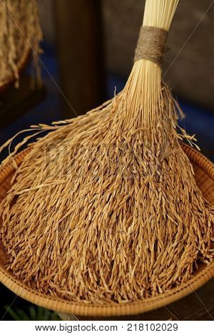 Rice in the husks paddy unmilled rice in wicker bamboo basket (Shallow Dof).
