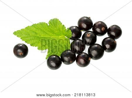 Currant with green leaf isolated on white background. Fresh black berry currant. Black currant branch.