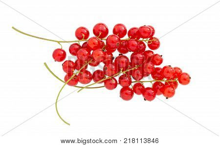 Currant isolated on white background. Fresh red berry currant. Red currant branch.
