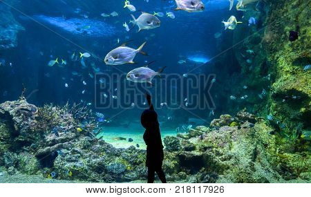 Happy kid observing fishes swimming in a large aquarium