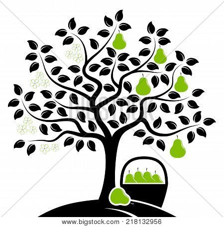 vector pear tree in two seasons and basket of pears isolated on white background