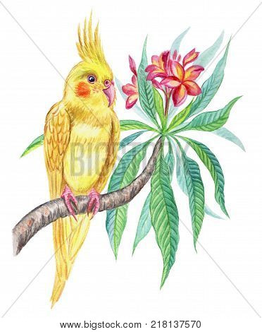 Yellow parrot cockatiel on a branch blooming frangipani, watercolor illustration.