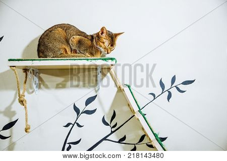 portrait of beautiful brown cat sleeping on shelf indoor