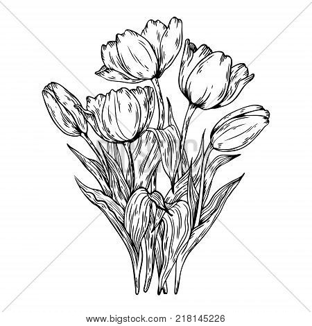 Bouquet of tulips flowers engraving vector illustration. Scratch board style imitation. Hand drawn image.