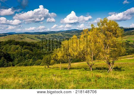 trees with yellow foliage on grassy slope. beautiful countryside landscape with gorgeous cloudscape in early autumn