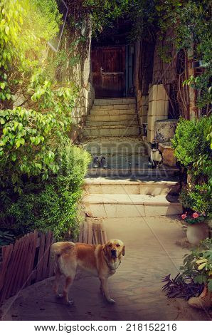 Beautiful narrow entrance to old house. It is picturesque courtyard surrounded by green lush foliage. A big red dog stands in the foreground looking to the camera. Black-white cat sitting on stone stairs of the doorway