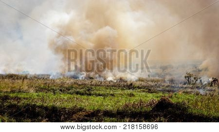 Slash and burn agriculture in murchison park, or fire fallow cultivation,is a farming method that involves the cutting and burning of plants in a forest or woodland to create a field called a swidden