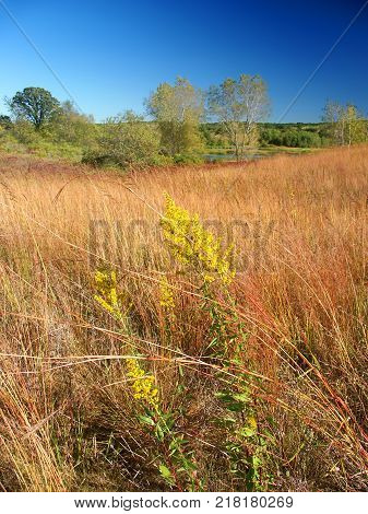 Beautiful hillside prairie of the Kettle Moraine State Forest in Wisconsin