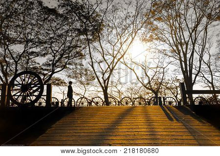 Silhouette of a girl wandering at golden hour. Golden sunlight shines through trees. Falling leaves in silhouette. Cart wheel barrier along alley way. Woman in silhouette. Golden hour and silhouette of trees.