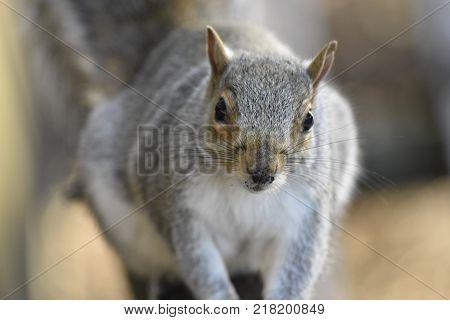This wonderful curious squirrel. Wild. Animal Kingdom.