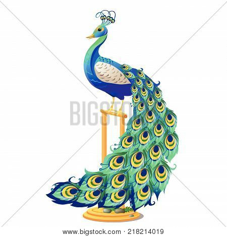 Beautiful bird peacock sitting on a Golden perch isolated on white background. Vector cartoon close-up illustration.