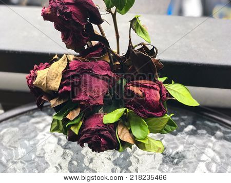 Withered rose in a pot on the table