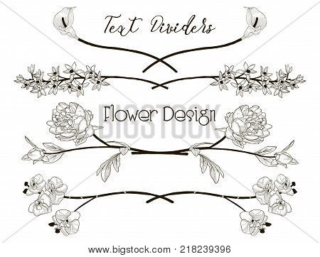 Black Hand Drawn Floral Text Dividers, Line Borders with Branches, Herbs, Plants and Flowers. Decorative Outlined Vector Illustration. Flower Design Elements. Peony, Calla-Lily, Orchid