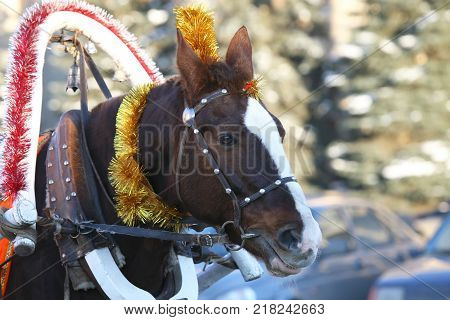 the a horse in harness with Christmas decoration