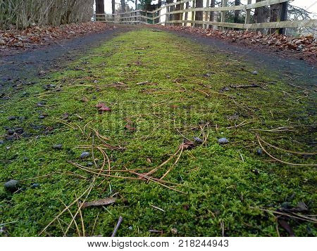 Ground View of a Driveway - Landscape