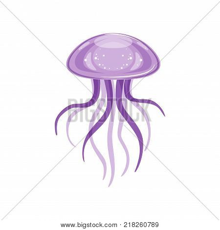 Purple jellyfish, species of underwater life   vector Illustration on a white background