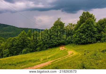 dirt road leads in to the forest on overcast day. beautiful summer scenery in stormy weather