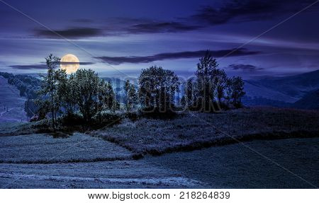 small orchard on a grassy rural field at night. lovely summer scenery in mountains
