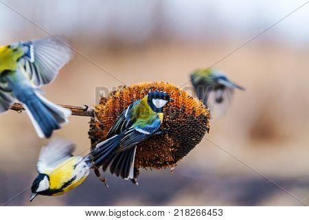flock of wild birds at the bird feeder , wildlife, winter, bird watching