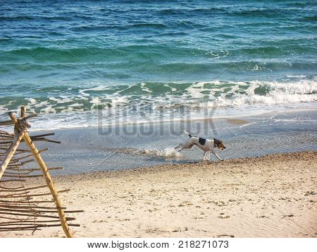the dog runs along the edge of the sea with the object being transported