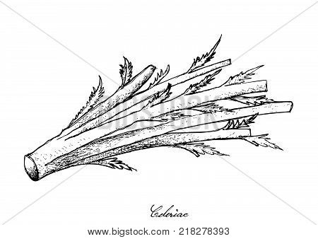 Bulb & Stem Vegetable, Motion Clip of Illustration Hand Drawn Sketch Bunch of Fresh Celeriac or Turnip Rooted Celery Used for Seasoning in Cooking. Isolated on White Background.