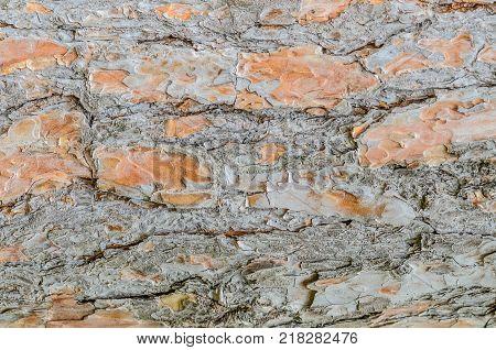 Bark of coniferous pine tree. Dark cortical tones.