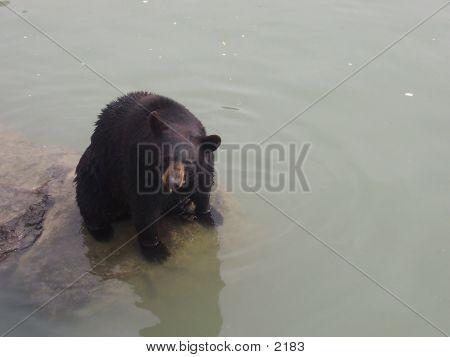 Hey Bear!