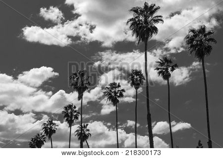 Palm Trees against a sky with puffy white clouds (Black and White)