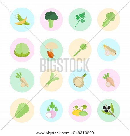 Set vector illustration of vegetables. Flat elements with color round backdrops on white background