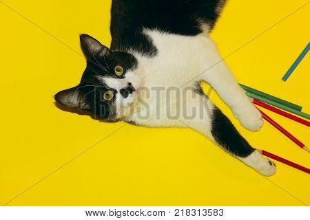 Cute tuxedo cat with funny face.Tuxedo Cat over yellow background. Close up of a Cat, cropped shot. Animal Portrait. Black Cat Playing with Pencils. Black Cat Over Yellow Background.