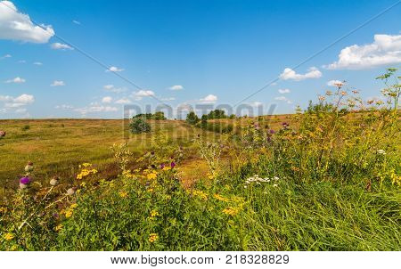autumn Steppe landscape with thistles in the foreground poster