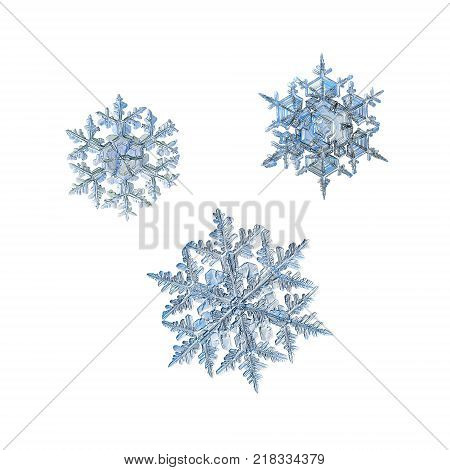 Three snowflakes isolated on white background. Macro photo of real snow crystals: large stellar dendrites with complex, elegant shapes, hexagonal symmetry, glossy relief surface and long, ornate arms.