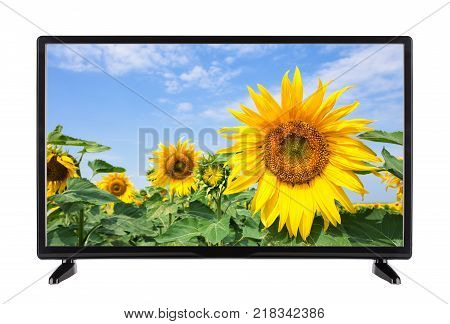 Flat modern TV with sunflower on the screen. Isolated on white.