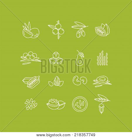 Superfoods line vector icons. Berries, nuts, vegetables fruits and seeds. Organic superfoods for health and diet. Detox and weightloss supplements.